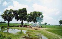 Halottegetes-India-Bihar-allam