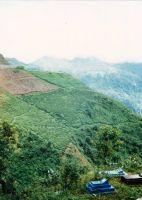 Sirhelyek-Kurseong-kozeleben-Nyugat-Bengal