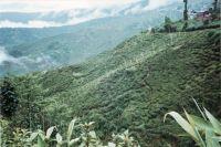 194_Darjeeling