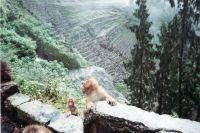 195_Darjeeling