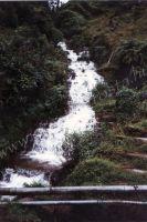197_Darjeeling