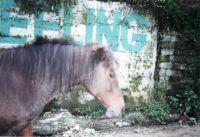 209_Darjeeling