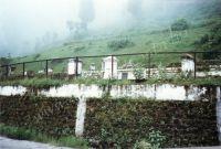 221_Darjeeling