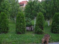 04_Irinovac-es-kornyeke