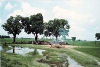 168_West-Bengal