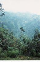 178_Darjeeling
