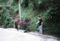 207_Darjeeling