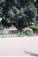 345_Bodhgaya