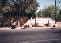 Iran_041